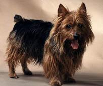A picture of a dog.